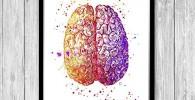 Cerebro color aquarela