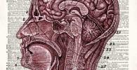 Lienzo anatomía