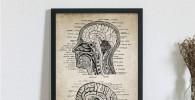 kldfig Vintage Cabeza Humana y anatomía del Cerebro Impresiones del Arte de la Lona Cartel Neurociencia Anatomía Humana Pintura